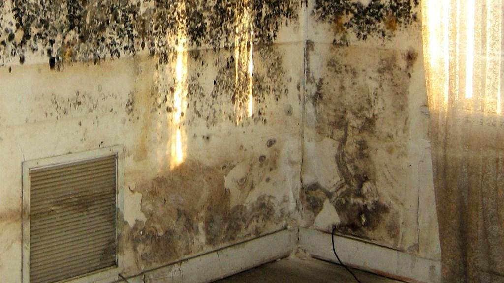 Best Paint For Mouldy Walls