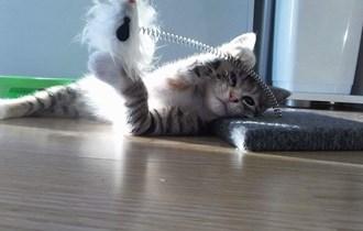 Usluga čuvanja mačaka