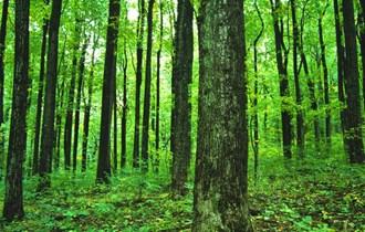 drva za ogrjev