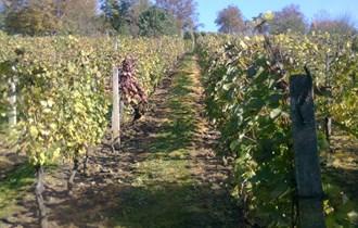 Vinograd u Milanovcu (Mala Amerika), Virovitica, 865 m2 / 240čhv