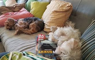 Usluga čuvanja pasa
