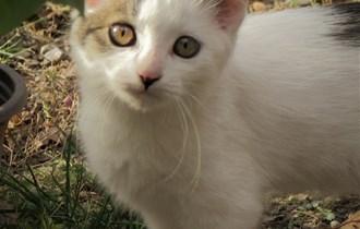 Mačić očišćen od parazita, naviknut na suživot sa psima - POKLANJAMO