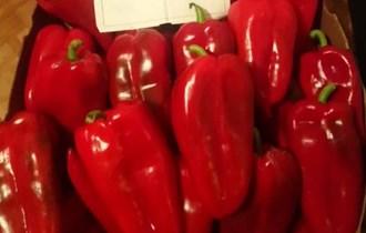 Seme paprike ajvaruse vrhunskog kvaliteta i rekordnog prinosa