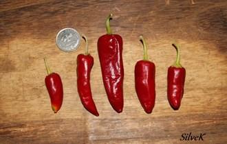 Papričice ljute crvene - domaće sjeme