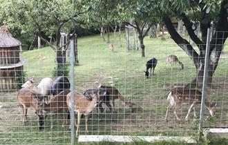 Jeleni lopatari i mufloni