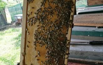 Domaći med povoljno (bagremov i cvijetni)