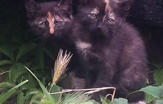 Mačići traže dom Čakovec