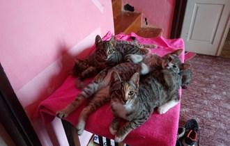 Darujemo 3 mace u dobre ruke