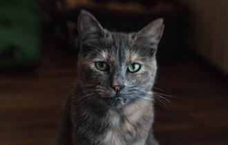 Traži se maca nestala na području Trogira