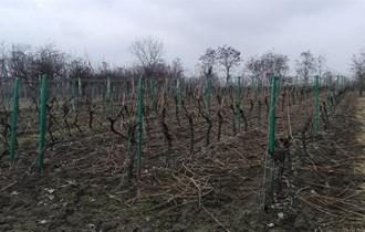 Orezivanje voćnjaka i vinograda