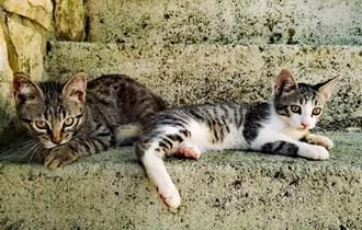 Veseli mladi dečki Roko i Mao traže dom:)