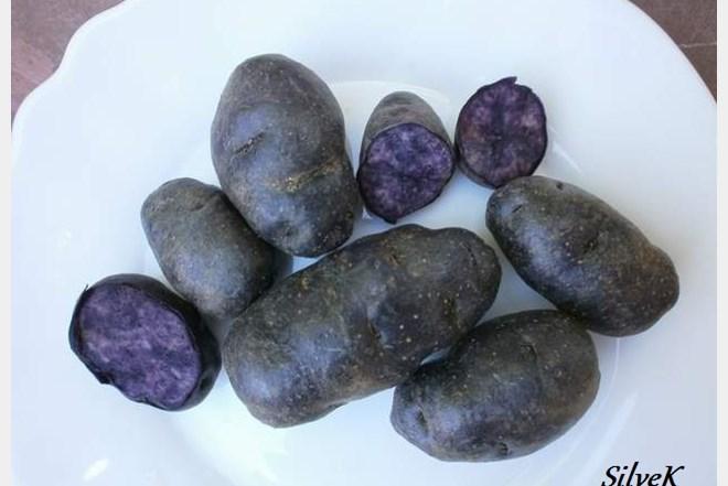 Plavi krumpir - gomolji za sadnju