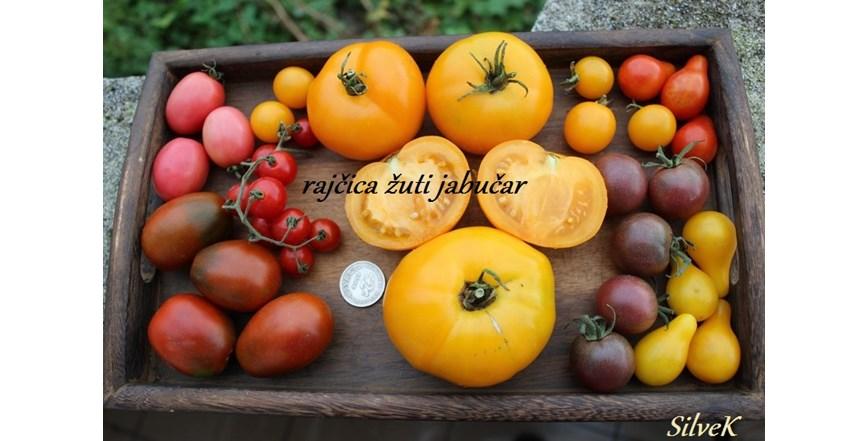 Rajčica žuti jabučar - domaće sjeme