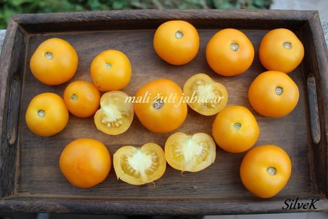 Rajčica žuti mali jabučar – domaće sjeme