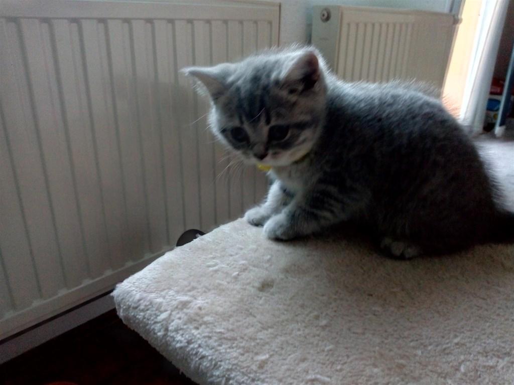 Lijepe čiste slike maca