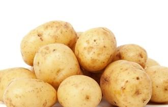 Bijeli krumpir 2,50 kn/kg