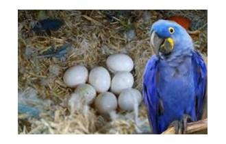 Papige raznih vrsta i njihova plodna jaja na prodaju.