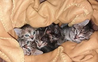 Poklanjaju se male mačke