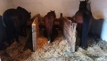 Konji za prodaju