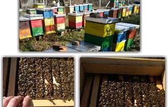 Pčelinje zajednice