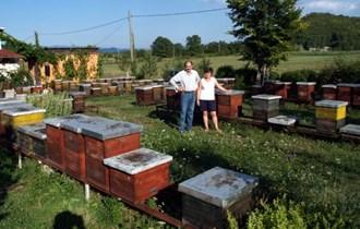 Prodajem pčele na LR okvirima