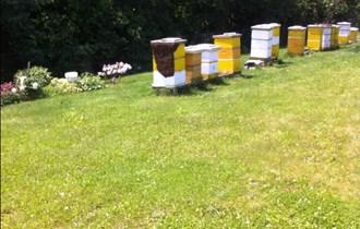 Pčele na LR okvirima