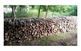Prodajem jasenova i grabova drva