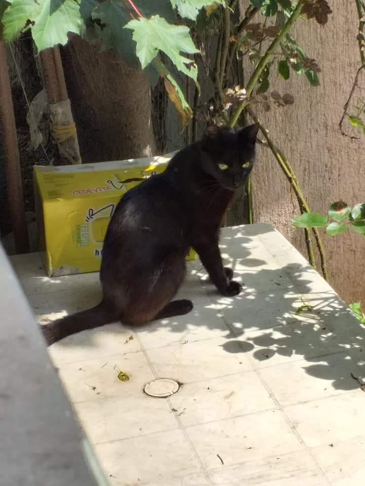 Slike amaterskih crnih maca