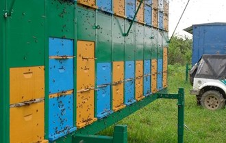 DOMAĆI MED iz vlastitog pčelinjaka LIVADNI-CVJETNI,BAGREM
