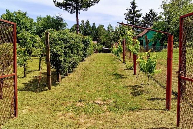 Poljoprivredno zemljište Vukovar Vučedol 2380 m2