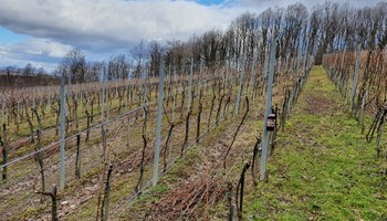 Održavanje okućnica, vinograda i voćnjaka , orezivanje, košnja,njega