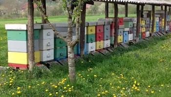 košnice s pčelama