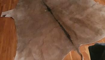 Antilopa tepih - porijeklo Južna Afrika