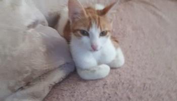 Umiljata maca Makarena hitnoo traži dom
