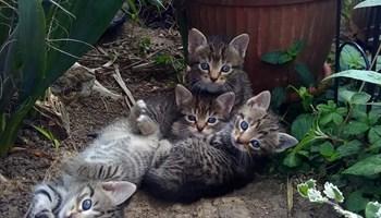 Mačići traže dom!