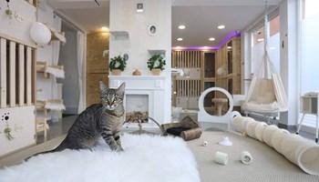 Čuvanje mačaka na Visokoj šapi Royal Cat Hotel