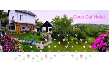CoCo Cat Hotel & Pet Resort