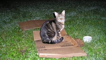 Maca beskućnica