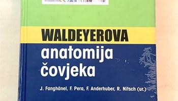 Waldeyerova anatomija čovjeka