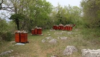 Prodaja pčelinjih društava