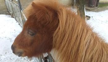 Prodaje se Pony. 044/652-692 zvati navečer ili 091/725-2269 po danu.