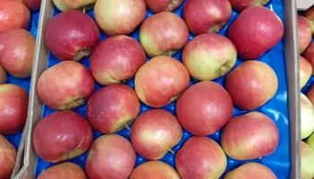 Prodajem jabuke - gala, ajdared, zlatni delišes