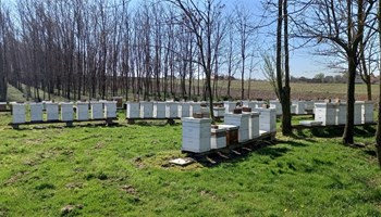 Prodajem pčele, 50 zajednica