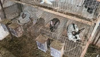 Zecevi i gajbe za zeceve
