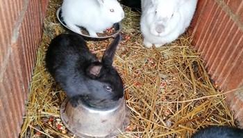 Zečevi mali za dohranu