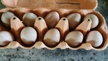 Jaja kokoši Perlinki