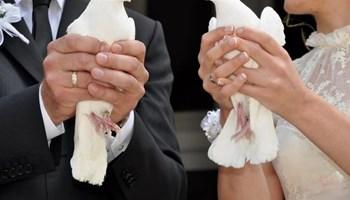 Bijeli golubovi za vjenčanje