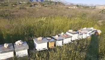 [Pčelarstvo] Košnice s 10 okvira