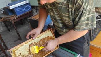 100% prirodni suncokretov med