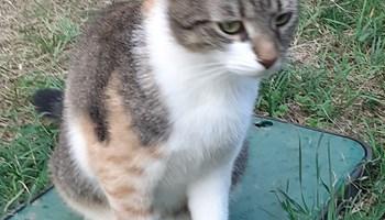 Maca trikolorka traži dom
